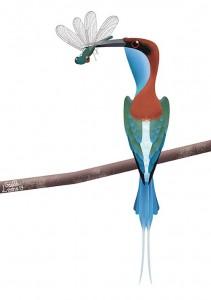 bluethroatedbeeeater