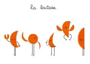 lactases2